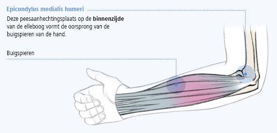 Afbeeding van de epicondylus medialis humeri