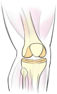 Knochen – für sicheren Halt und Schutz von innen heraus.
