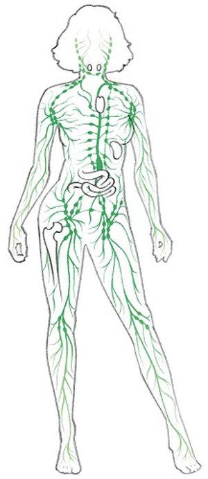 Lymphbahnen und -knoten