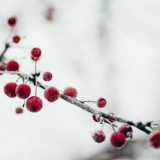 Wenn der Winter Einzug hält, verändert sich nicht nur unsere Umwelt.